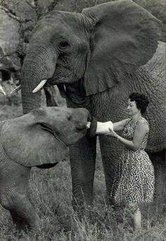 Daphne Sheldrick   Elephant Conservationist (1968)