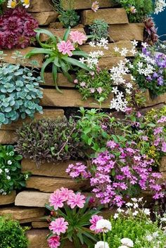 Rock garden plants in stone crevices including Alpines mix, in stone wall tower (Lewisia, phlox, Sempervivum, Silene acaulis Francis Copeland' etc. growing vertically in nooks and crannies; a variety of flowering and foliage Rock Wall Gardens, Rock Garden Plants, Garden Art, Garden Design, Garden Walls, Diy Garden, Landscape Design, Unique Gardens, Beautiful Gardens