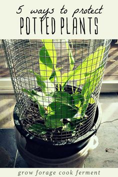 Potted plants need a