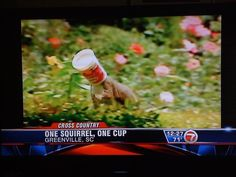 """Obviously only one person in Greenville, SC has seen """"two girls, one cup""""...and he wrote that headline."""