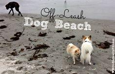 The Best Bay Area Off Leash Dog Beach #CarmelBeach