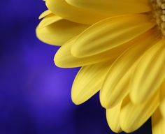 love blue and yellow together