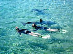 Dolphin Reef, Eliat, Israel