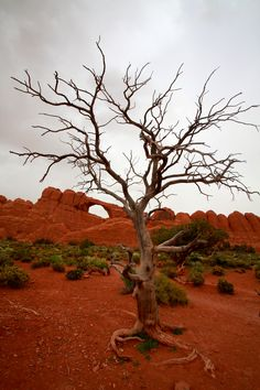 ~ Trees ~ Arches National Park, Utah....