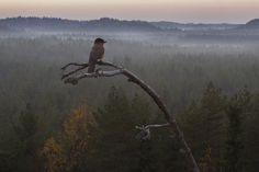 Tunnelmapala Suomen luonnosta - Metsän Tarina (Blu-ray + DVD) - Discshop.fi