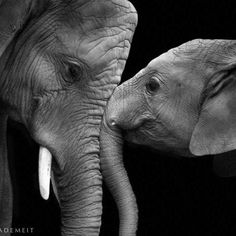 Look at their eyes...so much said without speech. Beautiful photo. Props to the artist. (If you are the person who took this, please contact me so I can credit you.) ~Sandi