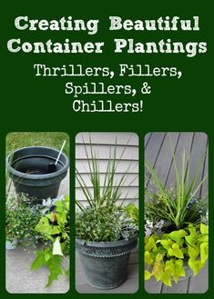 How to create stunning container plantings every time - via Better Hens and Gardens