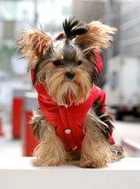 PUPPYANGEL - PET APPAREL, PET BOUTIQUE, DOG FASHION, DOG CLOTHING