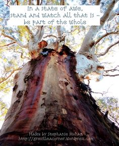 in a state of awe, stand and watch all that is - be part of the whole Haiku by Stephanie Mohan- October 2014