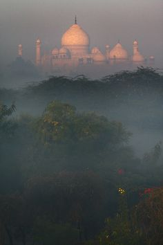 ♥ The Taj Mahal ... magical light ... one of the most beautiful and touching places I've ever been in my life!