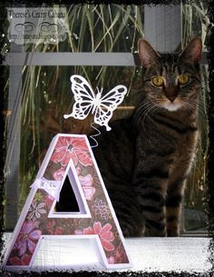 Therese's cat poses with the pretty Letter from 3D LETTERS SVG KIT she made.  I think the flying butterfly was a little tempting to her!!  So cute, Therese!