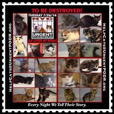 ++ NY ++ 22 INNOCENT LIVES TO BE DESTROYED 07/26/16 - - Info 22 CATS TO BE DESTROYED Please Share: - Click for info & Current Status: http://nyccats.urgentpodr.org/montage-071215/