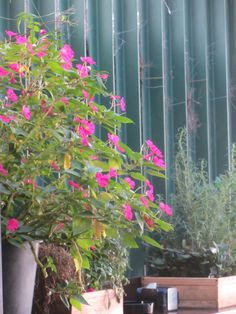 #plantas #terraza #odelito