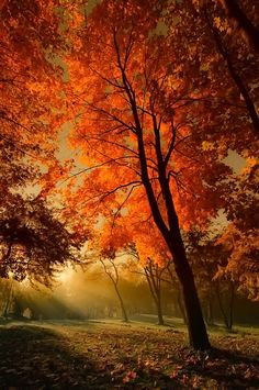 Autumn's glow.... this could be when eve when she desires to explore a bit of her new home