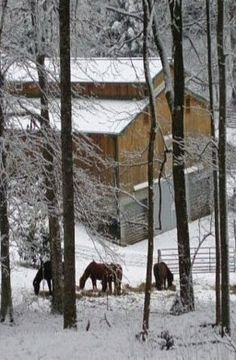 Barn & Horses In Winter Snow