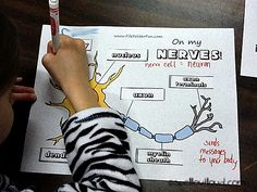 nervous system ideas and printables