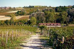 Moretti degli Adimari in the Alto Monferrato
