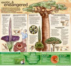 Jan 2011 Endangered Plants