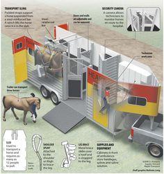 equine ambulance infographic