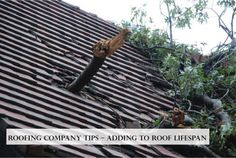 This is a useful article. Read it if you need more information about Roofing Company Tips – Adding to Roof Lifespan. No homeowner wants to contact their roofing company for a premature roof replacement.Here are some things you can do to help put off making that dreadful phone call to your roofing company for a new roof. Read more about Roofing Company Tips at http://biondoroofing.com/roofing-company-tips-adding-to-roof-lifespan/