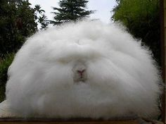 My hair when it's humid out lol