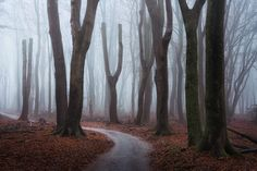 A spooky afternoon in the Dutch Forest.