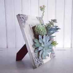 Ach, so schön! Handgefertigt aus einem notleidenden Scroll-Bild mit Hardware montiert, so kann es Tabelle oben oder an der Wand-Dekor. Entworfen mit einer Vielzahl von Sukkulenten gepflanzt an genau der richtigen Stelle! Fügen Sie auf 1,2 oder drei Luft-Anlagen um wirklich Ihren Garten pop! Diese coolen kleine Pflanzen brauchen keine Boden, so dass Sie sie bewegen können Ihre eigenen lebendigen Kunstwerk zu erstellen. Interaktiv kreative! Wenn Ihr Garten beginnt zu Reifen und ausdünnen…