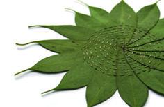 Alice Fox Leaf Stitching: Eucalyptus Circle (2015)