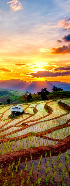 //Terraced Paddy Field in Mae-Jam Village, Chaing Mai Province, Thailand