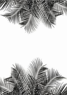 palms trees.