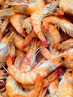 Alimento para animales a partir de desechos marinos