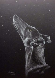 The Stargazer by Steve Sanderson - Pencil on A4 black paper