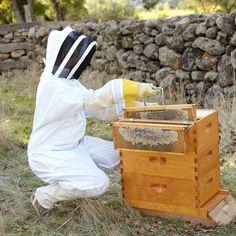 Backyard Beehive #Beekeeping
