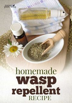 Amazing Homemade Wasp Repellent Recipe - Wasps are creepy and the thought of them flying around with a chance of stinging makes me shudder. They are mean creatures and it doesn't take much to set them off. This amazingly effective homemade … Get Rid Of Wasps, Bees And Wasps, Natural Wasp Repellent, Wasp Deterrent, Wasp Spray, Insect Repellent Plants, Diy Décoration, Pest Control, Organic Gardening