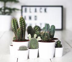 plantas-decor-cactos-suculentas-Luciana-Caram-dicas-002