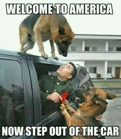 Love and loyalty. When Xiaolu, a soldier that trained police dogs, was retiring and packed his luggage into the car to leave, one dog started bashing the window barking, and the other jumped on the roof of the truck as it started driving away. When the tr Military Dogs, Police Dogs, Animals And Pets, Funny Animals, Cute Animals, I Love Dogs, Cute Dogs, Humor Animal, Canis Lupus