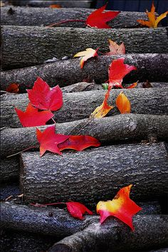 Leaves and firewood