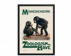 zoo-menneskeaberne-zoo-30 #plakatgalleridk #copenhagen #copenhagenzoo