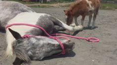 【動画】子馬を注意する親馬 しつこいから…  ロバ子の指導が入りました??