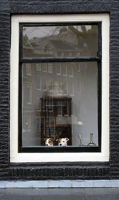 Window Pooch