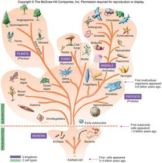 A website with a detailed Kingdoms mind-map and lots of additional biology info.