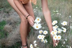 Daisies-I love daisies. Right now the fields are full of daisies, tiger lilies, and sweet peas and I just love it.