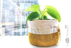 Green #cisco #green #mobilephotography #mobileedit #plant #office #greenoffice #deepstudio www.deep.studio