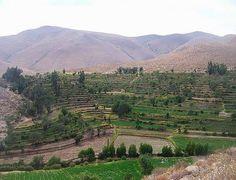 AREQUIPA. Región movió S/. 37 millones en 2014 con Sierra Exportadora http://hbanoticias.com/6515