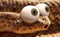 #Животные, #Глаза, #Змеи,  #аватары, #картинки, #фотки, #арт, https://avatarko.ru/kartinka/8989