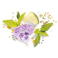 Herbal Essences Bio Renew Revitalize Cucumber & Green Tea Dry Shampoo - 4.9 oz