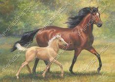 0001 by Chris Cummings   Horses   Imagimex - Beautiful Greeting Cards