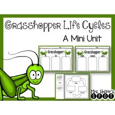 life cycle of a cricket grasshopper grasshoppers are closely related to crickets the following. Black Bedroom Furniture Sets. Home Design Ideas