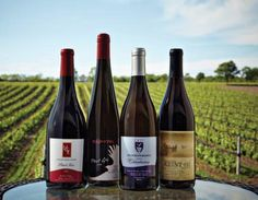 PEC wines!  Another Ontario wine region to check out.