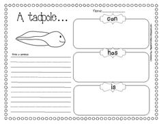 SIMPLE LIFE CYCLE OF A FROG UNIT {3 STAGES OR 6 STAGES} - TeachersPayTeachers.com